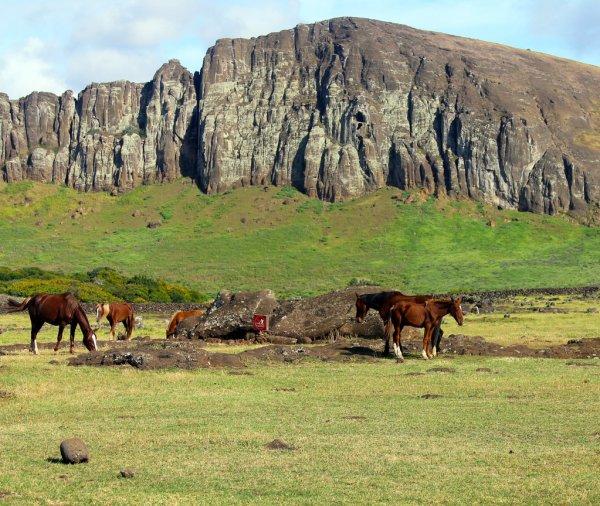 Wild horses grazing next to fallen moai, Easter Island